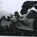 Anni-Savolainen-VF11_5-150x150