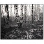 Ljuba_Tregoubova-14-150x150