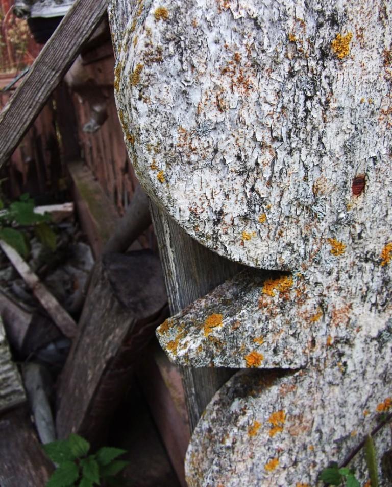 '' Reunus '' Vanhan rakennuksen reunusta saa uutta väriä, kun sammal alkaa asuttaa sitä.